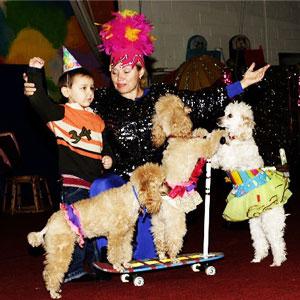 Poodle Show